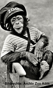 Schimpanse Petermann